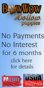 Bowwow Hollow Puppies - no payments for 6 months