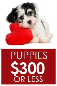Puppies $300 or Less