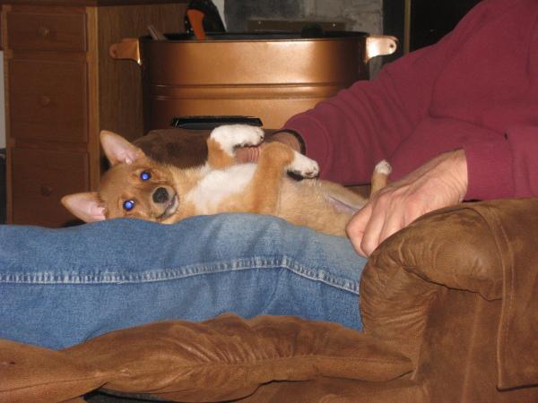 Testimonials Bowwow Hollow Puppies